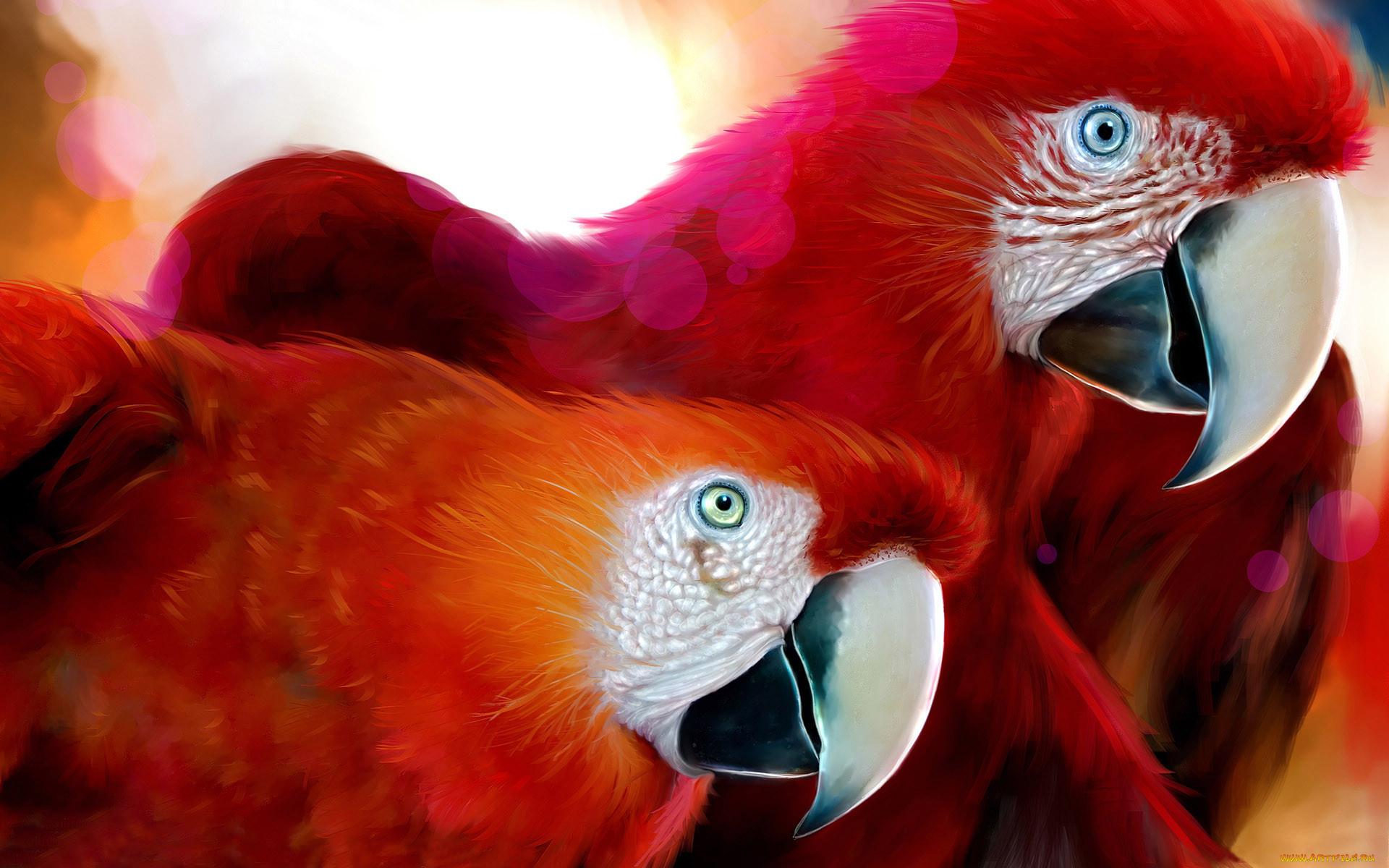 слова картинки на аву животных и птицы некоторые дамы пользуются